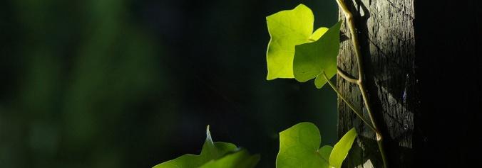 leaf-2747408