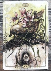 Ace of Wands - Hush Tarot