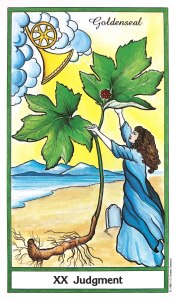 Herbal Tarot - Goldenseal - Judgement