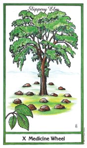 Herbal Tarot - Medicine Wheel of Fortune - Slippery Elm