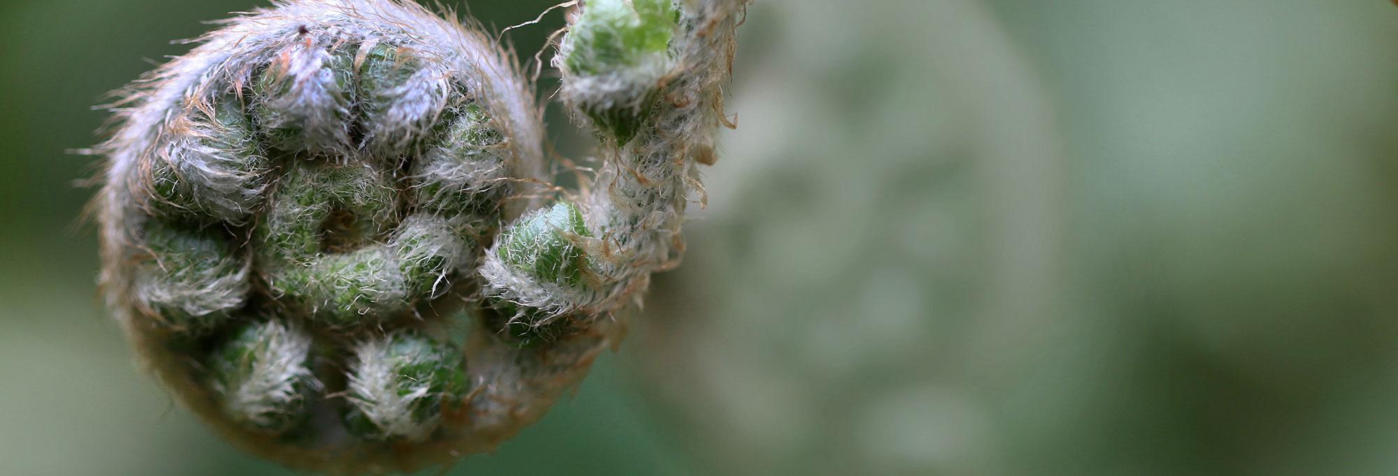Herbs03