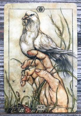 Hush Tarot - Ace of Pentacles
