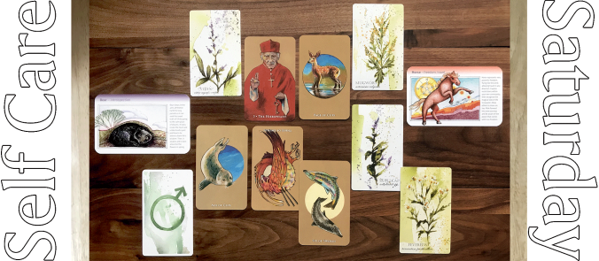 Scorpio Sea Tarot, Wild Medicine Herbal Deck, Wild Rituals Intentions Deck, Spirit Animals Oracle