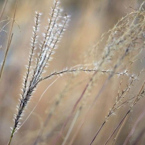 Swaying Weeds