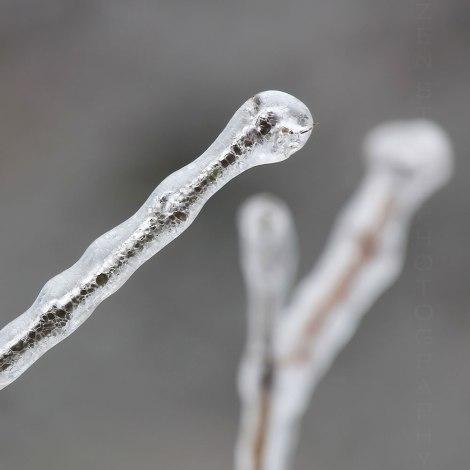 Spring Encased in Ice