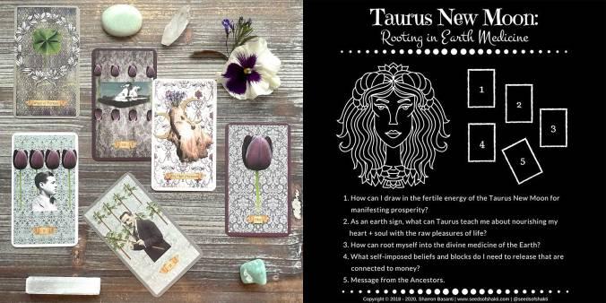 Floriography Tarot - Taurus New Moon Tarot Reading