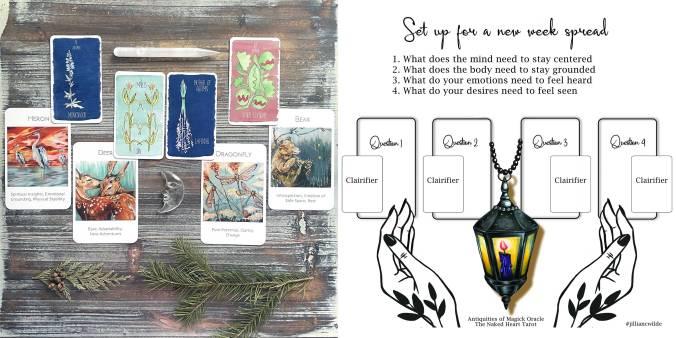 Tarot of Plants (Solar Edition) and Wildlife Wisdom Oracle