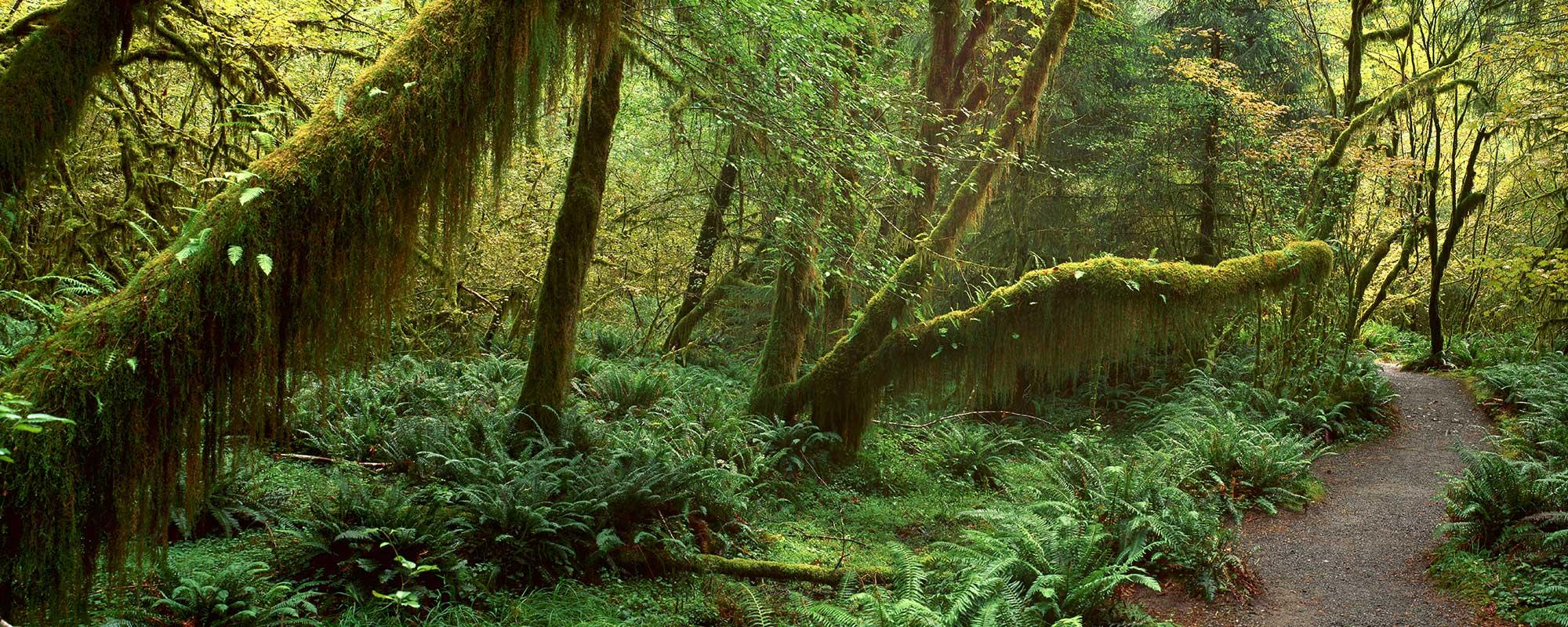 RainforestPath